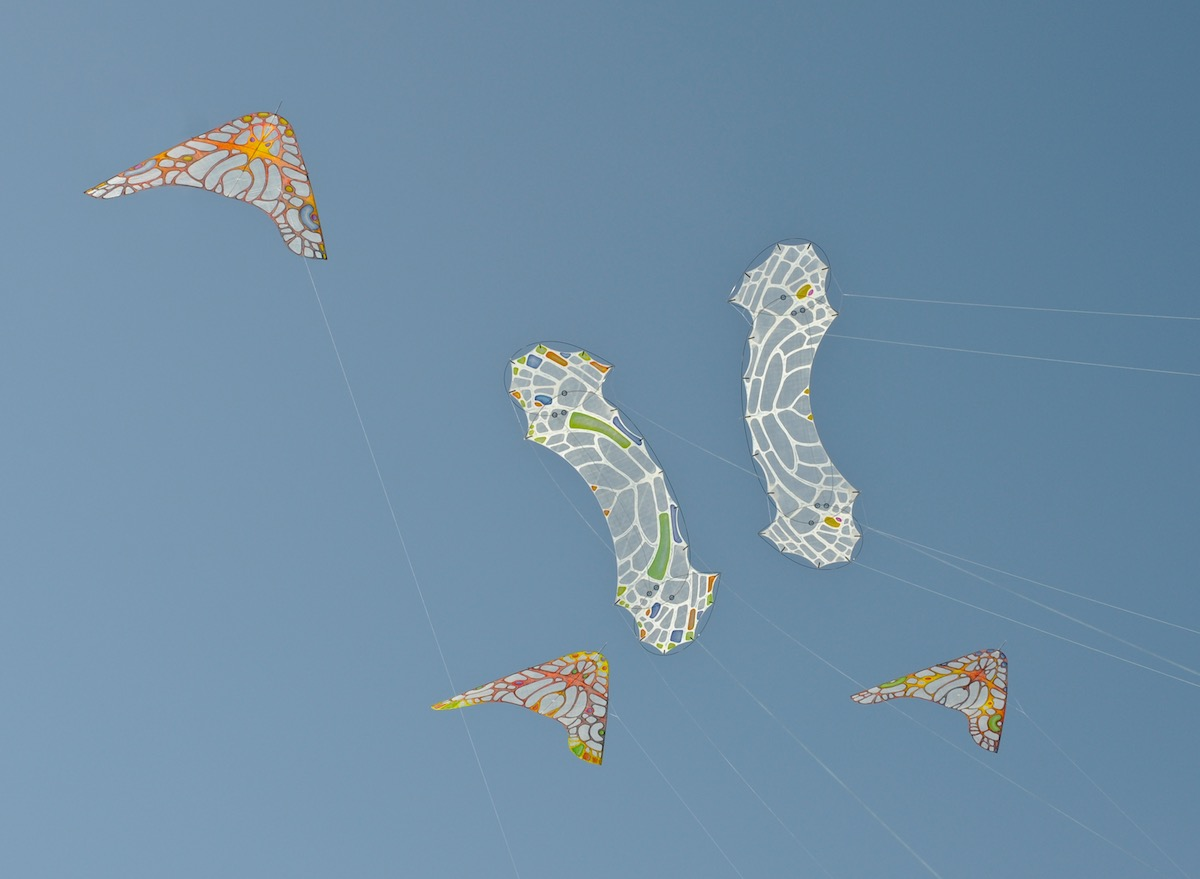 two lacewing flame quadline kites by windfire designs and 3 morho gliders