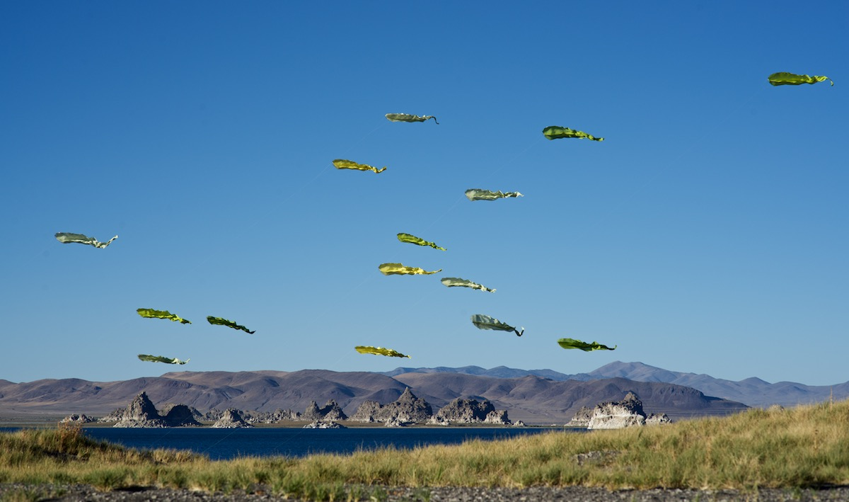 Green silk flowx kites at Pyramid Lake Nevada - photo by tim elverston