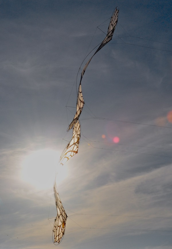 Two LaceWing Flames - quadline kites by windfire designs - flown by Anke Sauer and Ruth Whiting in San Vito Sicily